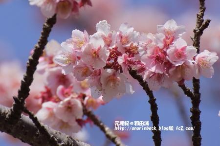 EOS6D_2015_02_07_9999_88.jpg