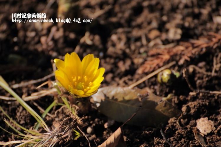 EOS6D_2015_02_11_9999_20.jpg