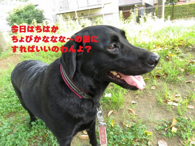 20150817-03.jpg