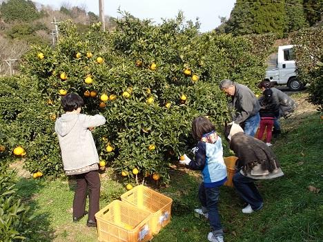 2014収穫祭 収穫
