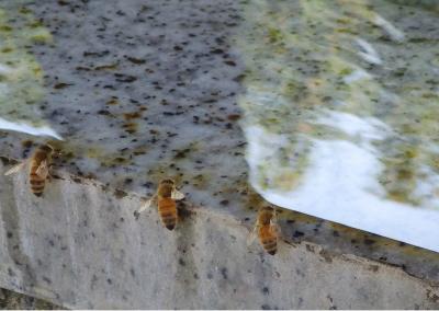 蜂水 (2)