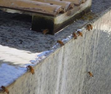 蜂水 (3)