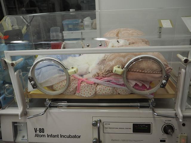 酸素室で 輸血