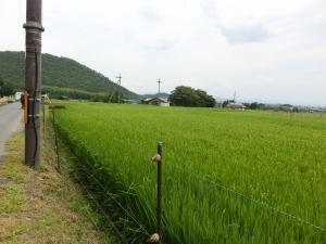20150816_12田園地帯