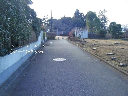 DSCF7711.jpg