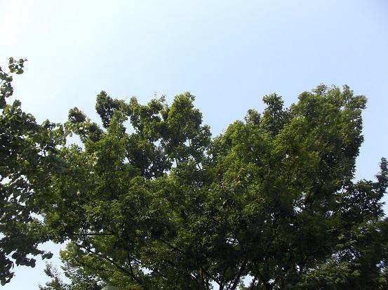樹1162