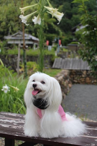 2015.08.19 柳谷観音-7