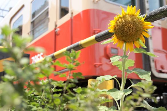 2015/8/9 阪神武庫川線 洲先~武庫川団地前