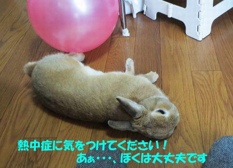 pig 20150810