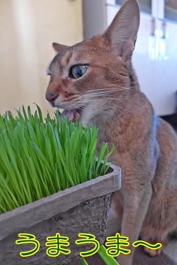 猫草好きだよね