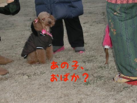 th_おばか
