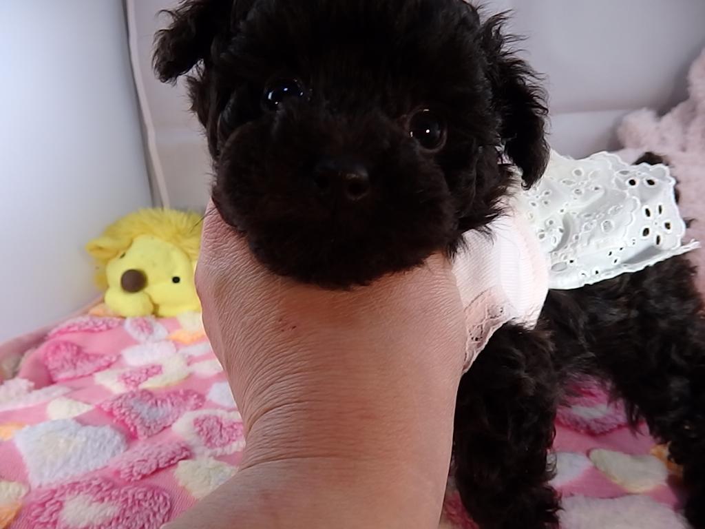 ルキナの赤ちゃん