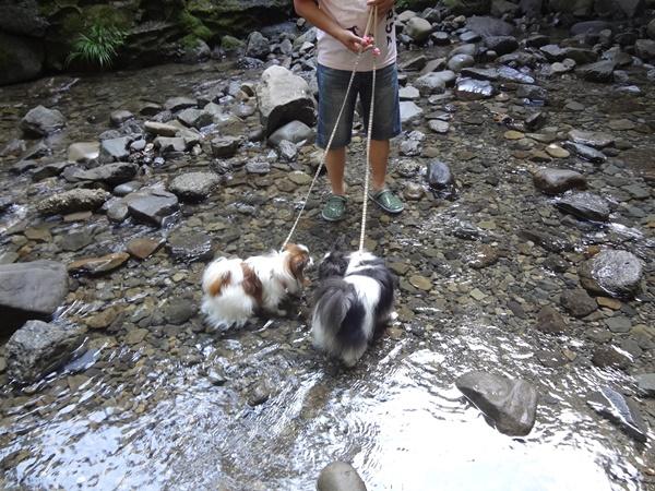 りぼんちゃんと小梅ちゃん川に