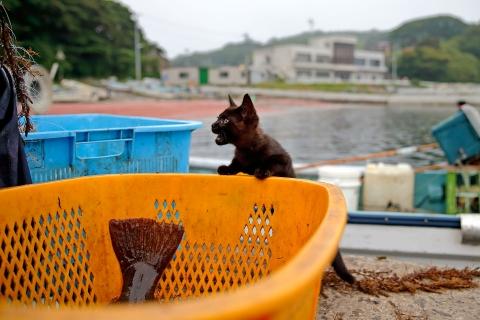 ヒラメのカゴを除く子猫