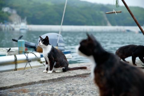 魚を追う猫達