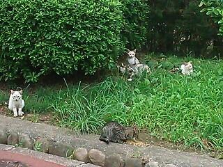 関西 地域でご飯をもらう猫