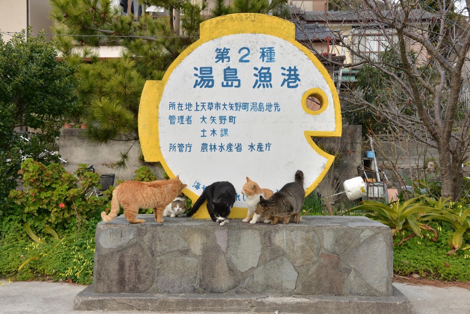 天草の猫島