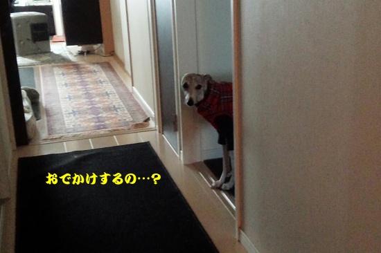 DSC_2433_2015010419373266c.jpg