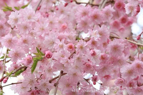 Photo therapy206桜風