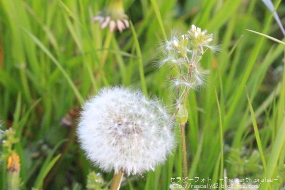 Photo therapy207ここからのはじまり-0429