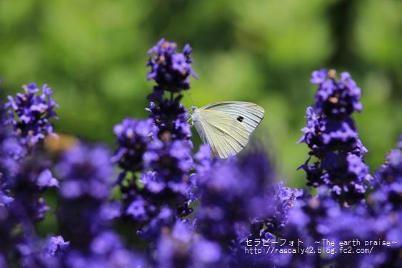 Photo therapy270好き-0701