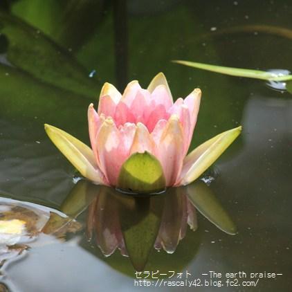 Photo therapy306開花のタイミング-0806