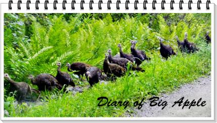 turkeyの大行進