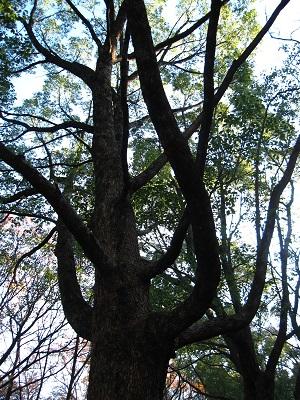 屋久島のメデューサの木みたい(笑)