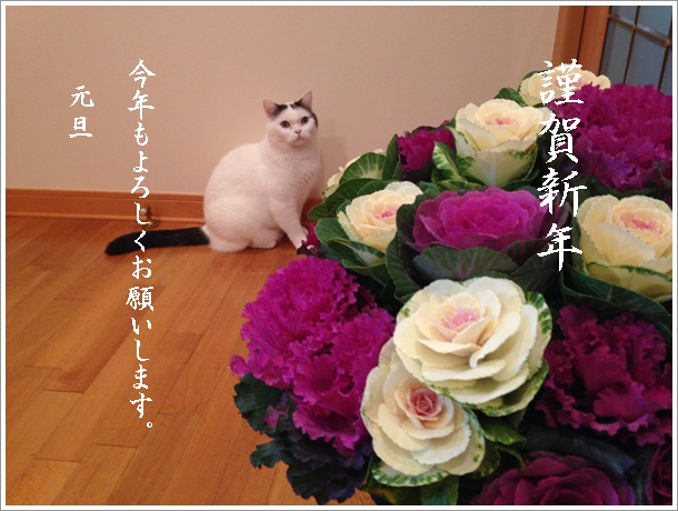 IMG_53702015.jpg