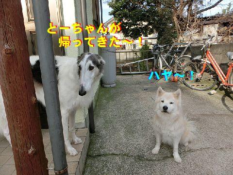 a_20141225222045af3.jpg