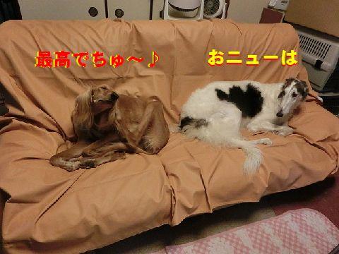 a_20141230011052db8.jpg