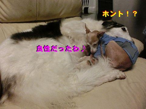 b_201412262104136ba.jpg