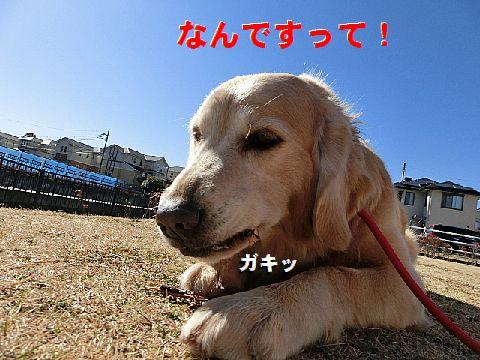 b_201502042303056d9.jpg