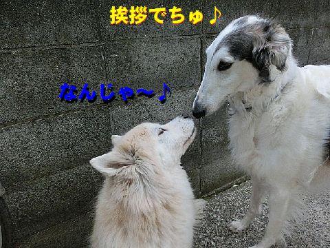 d_20150127011902d61.jpg