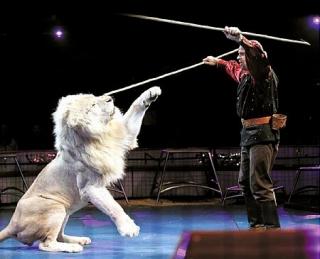 lionss.jpg