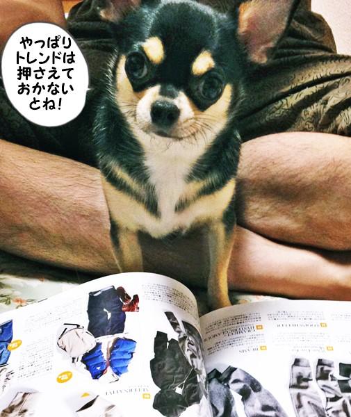 2015-08-17 ちまき 3 ブログ用