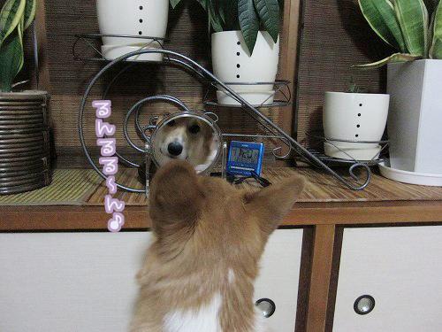 鏡の前で~