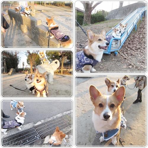お誕生日のお散歩2