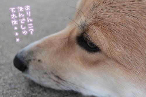 ありんこ?