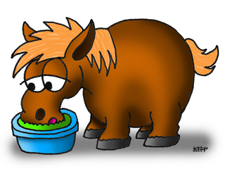20150816_Blog3_Equine_Metabolic_Syndrome_Pict1.jpg