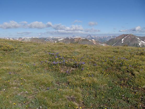 4,000m超の尾根に咲く高山植物