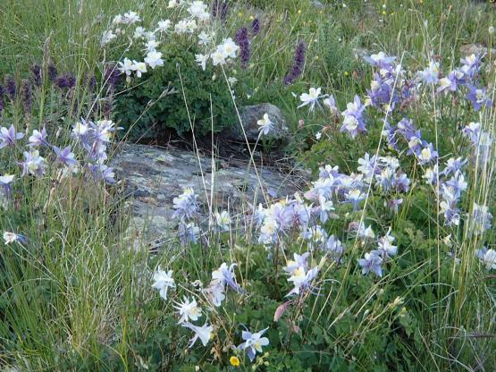 Creek沿いに高山植物が繁る美しいトレイルだ