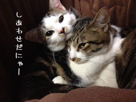 S__11337747.jpg