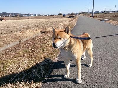 翔 2015.1.10-3