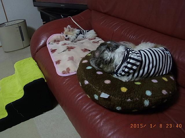 http://blog-imgs-77.fc2.com/s/a/c/sachimam0920/sachimam1501090001.jpg