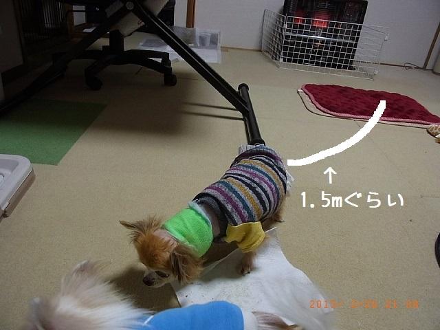 http://blog-imgs-77.fc2.com/s/a/c/sachimam0920/sachimam1502260004.jpg