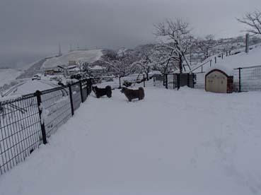 去年の雪山