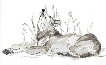 狼ゴロリ3