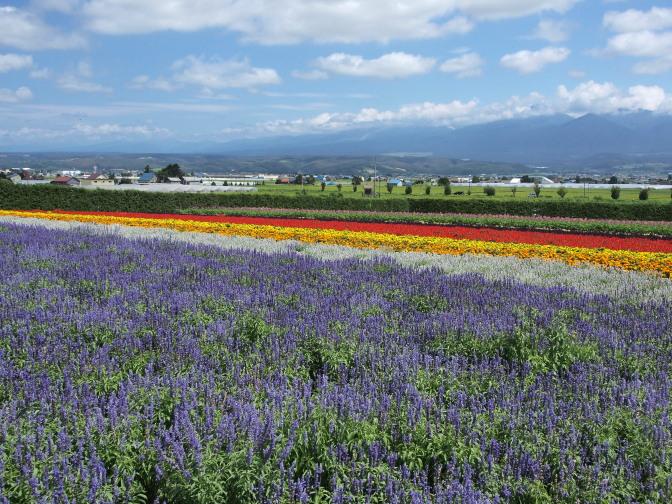 ファーム富田から大雪山系の山々を望む