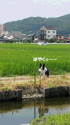 20150811_121430.jpg